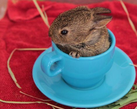 Bunny in a teacup? Have mercy on my ovaries, large-eared overlord. You're gonna make me squeal in a totally not grown-up way.