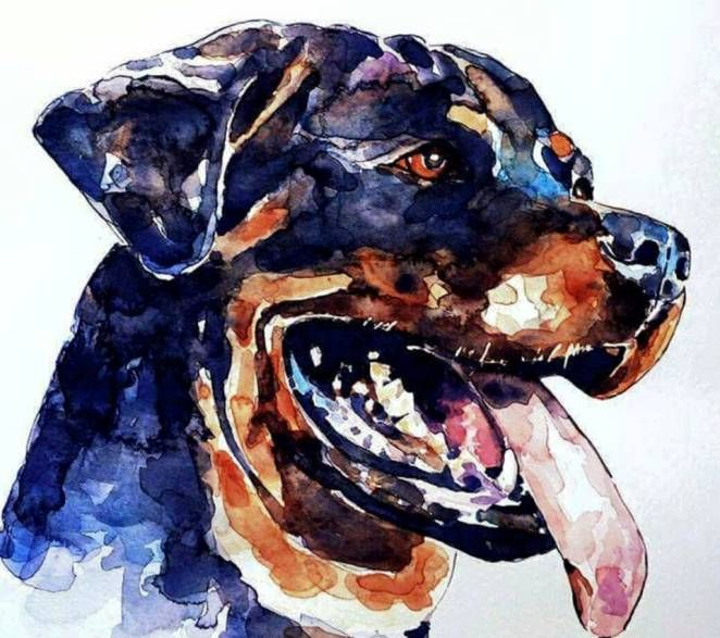 Rottweiler Watercolour Rottweiler Watercolor Splash Rottweiler