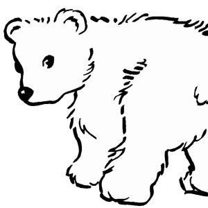 snow patrol polar bear coloring page kids play color for use