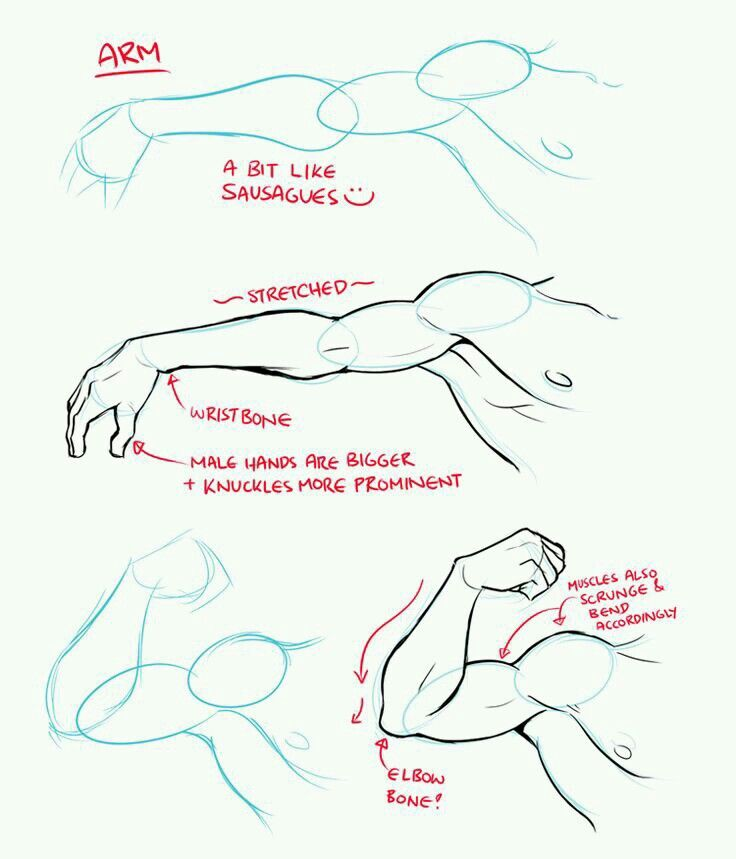 Pin by Cami on How to draw... | Pinterest | Draw, Anatomy and ...