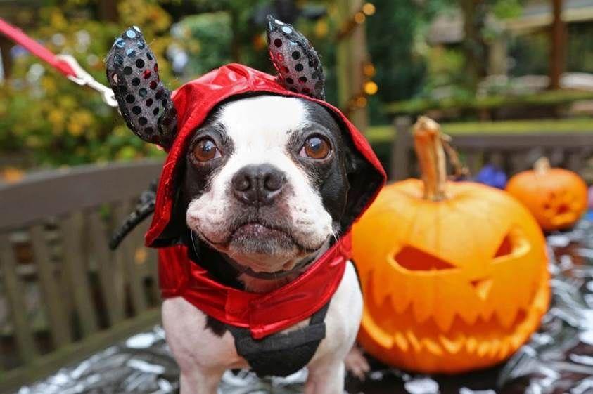 Consejos para hacer buenas fotos en Halloween esta noche