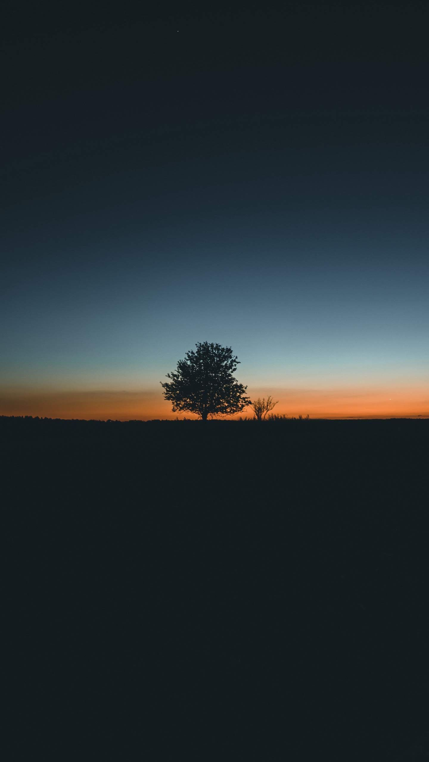 Get Latest Wallpaper For Iphone Xr 2019 Sunset Iphone Wallpaper Nature Wallpaper Tree Silhouette