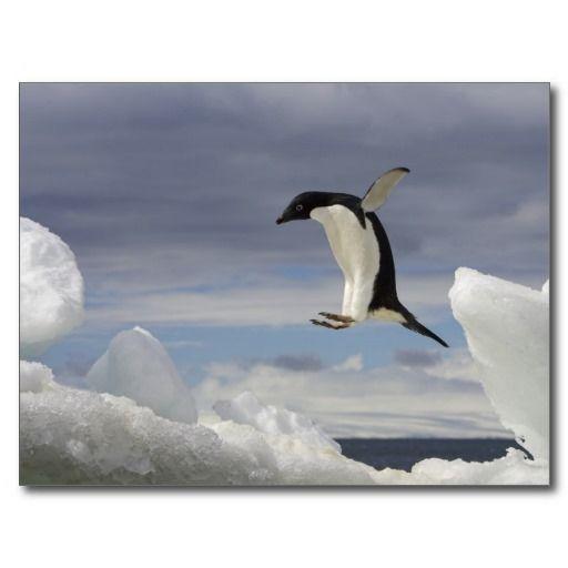 Brown Bluff, Antarctic Peninsula, Antarctica. Postcard