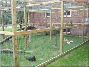 Free Outdoor Cat Enclosure Plans Cats Can Roam The Great Outdoors In This Ious Photo