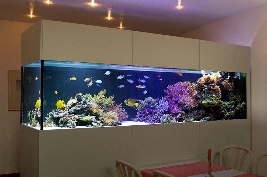 Acuarios grandes recatangulares fish tanks pinterest - Peceras en casa ...