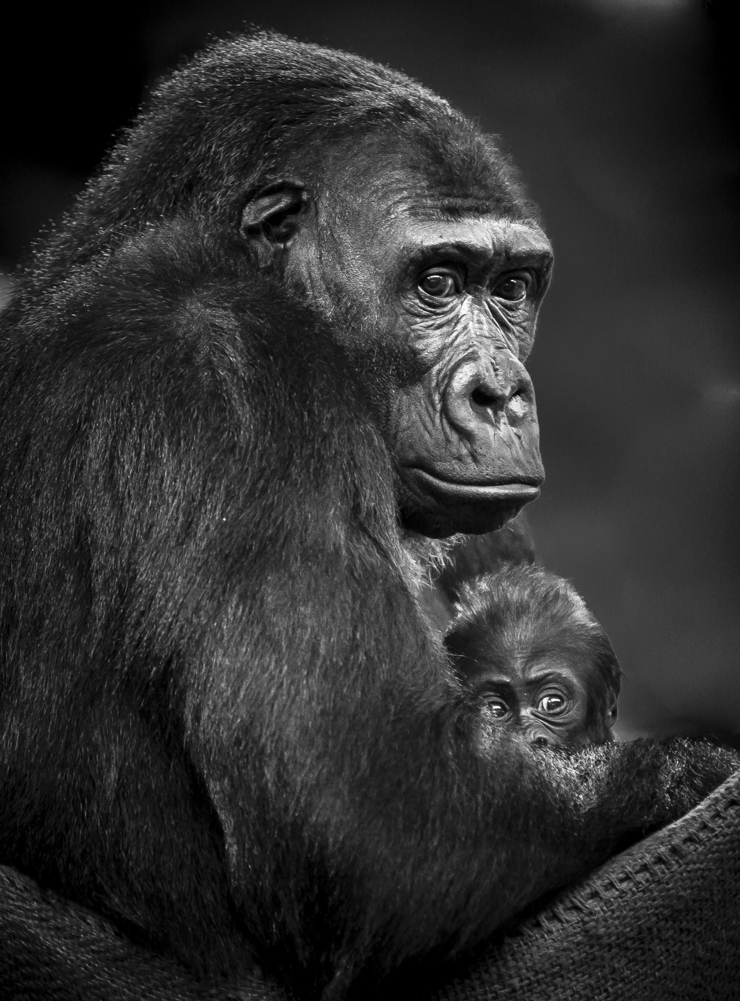 Motherhood 3, Cabarceno serie by Pavel Glazkov on 500px