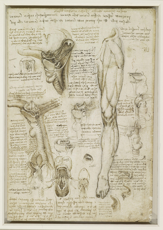 Pin von Creatore Disegno auf Maestro Leonardo | Pinterest | Studium ...