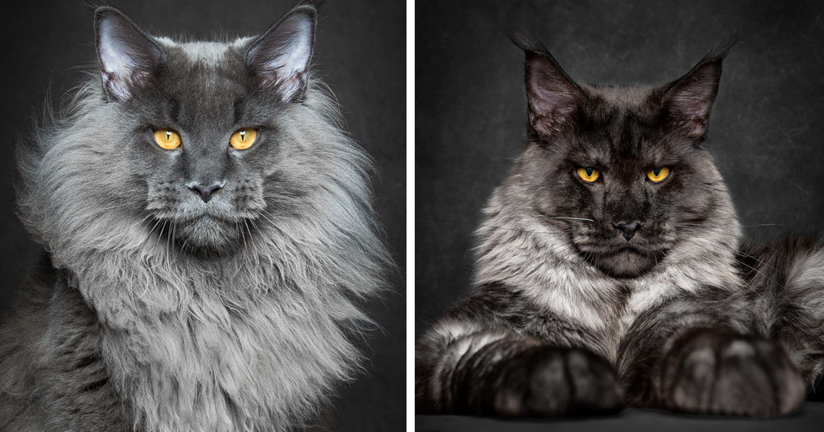 Best Adorable Cats Images On Pinterest Photo Cat Cat Lovers - This photographer is celebrating stray cats through majestic portrait photographs