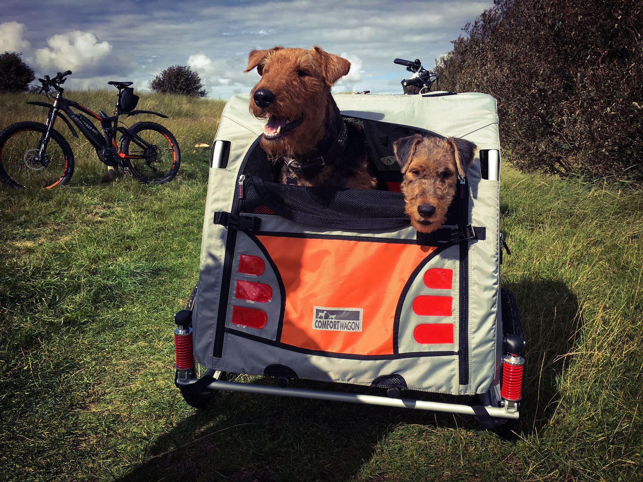 Airedale Terrier Hobby Zucht Aus Dem Siegtal In Nrw Zuchtziel Gesunde Freundliche Wesensfeste Familienhunde Airedale Terrier Fox Terrier Hundeausbildung