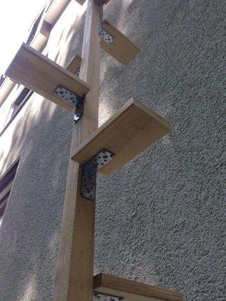 Cat Ladders Cat Ladder Cat Stairs Cat Diy