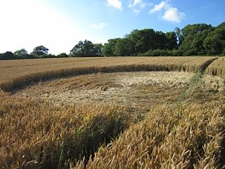 Crop Circle at Lower Bourton, nr Totnes, Devon, United Kingdom. Reported 18th July   2014
