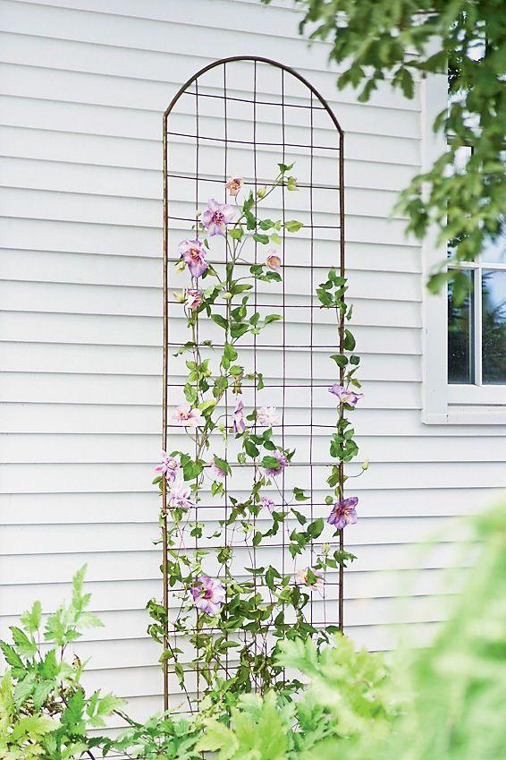 Metal Clematis Trellis Gardeners Com Clematis Trellis Metal Trellis Flower Trellis