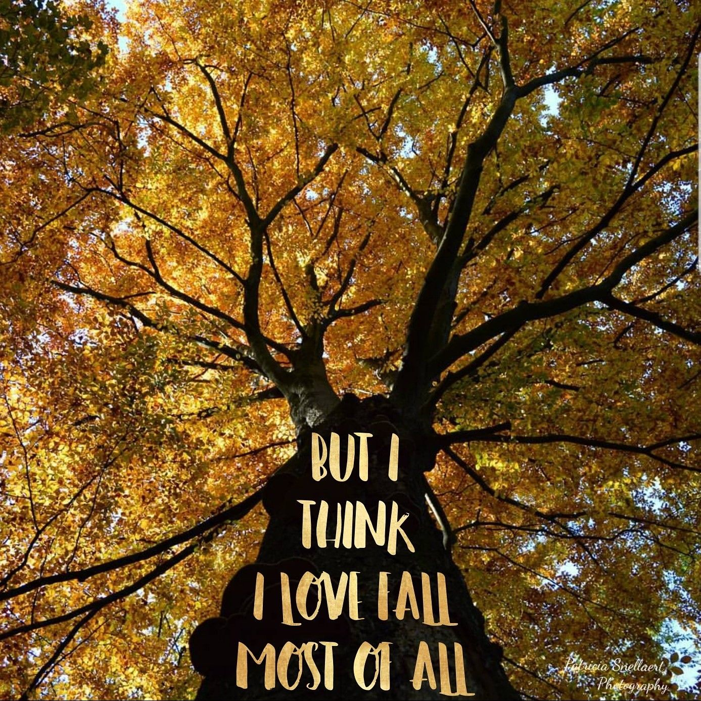 Download 'But I think I love fall most of all' Picture: P ...