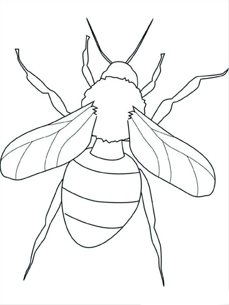 Birds And Insects Coloring Pages Insect Coloring Pages Bug Coloring Pages Butterfly Coloring Page