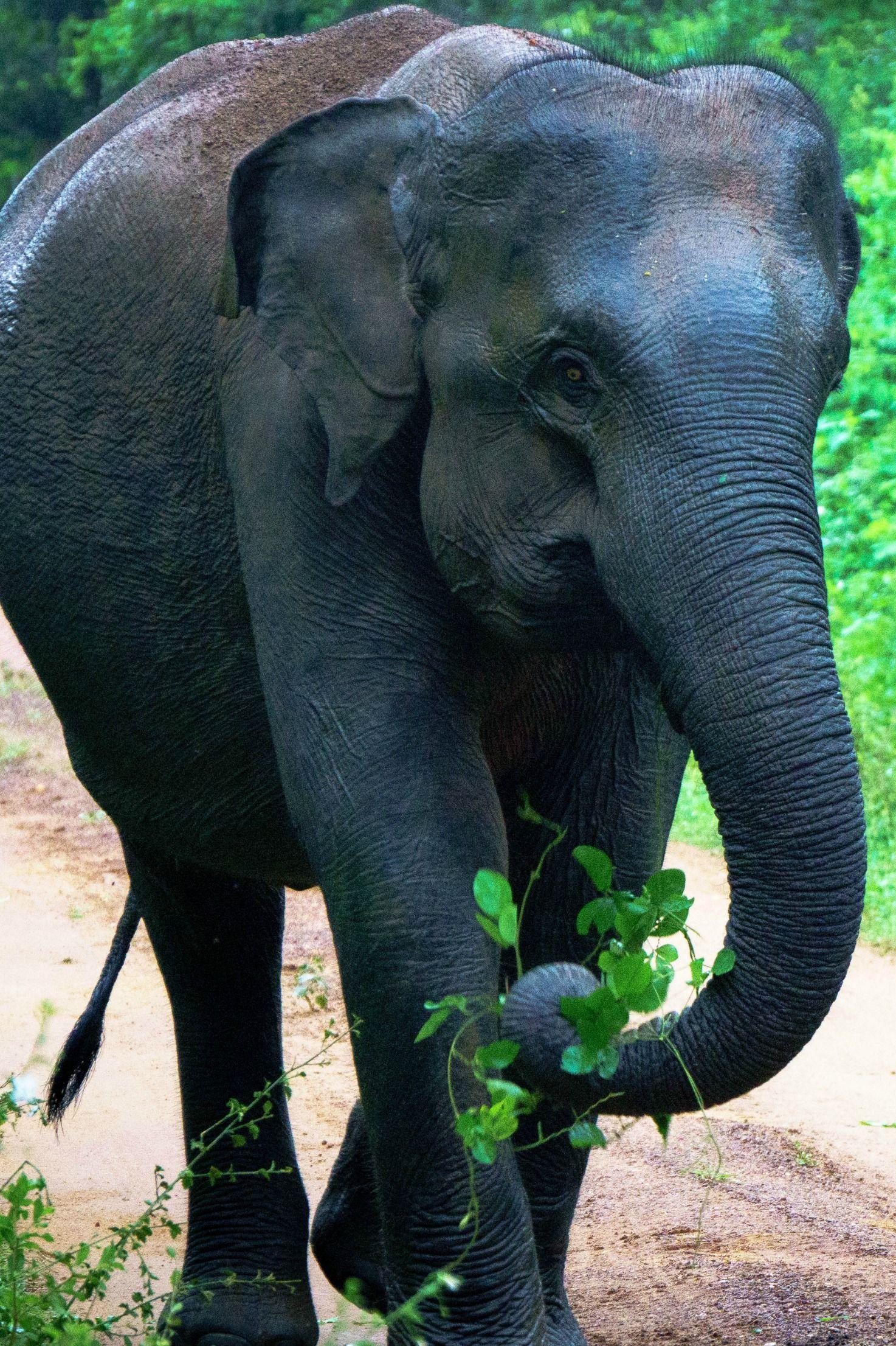 On Safari at Yala National Park, Sri Lanka