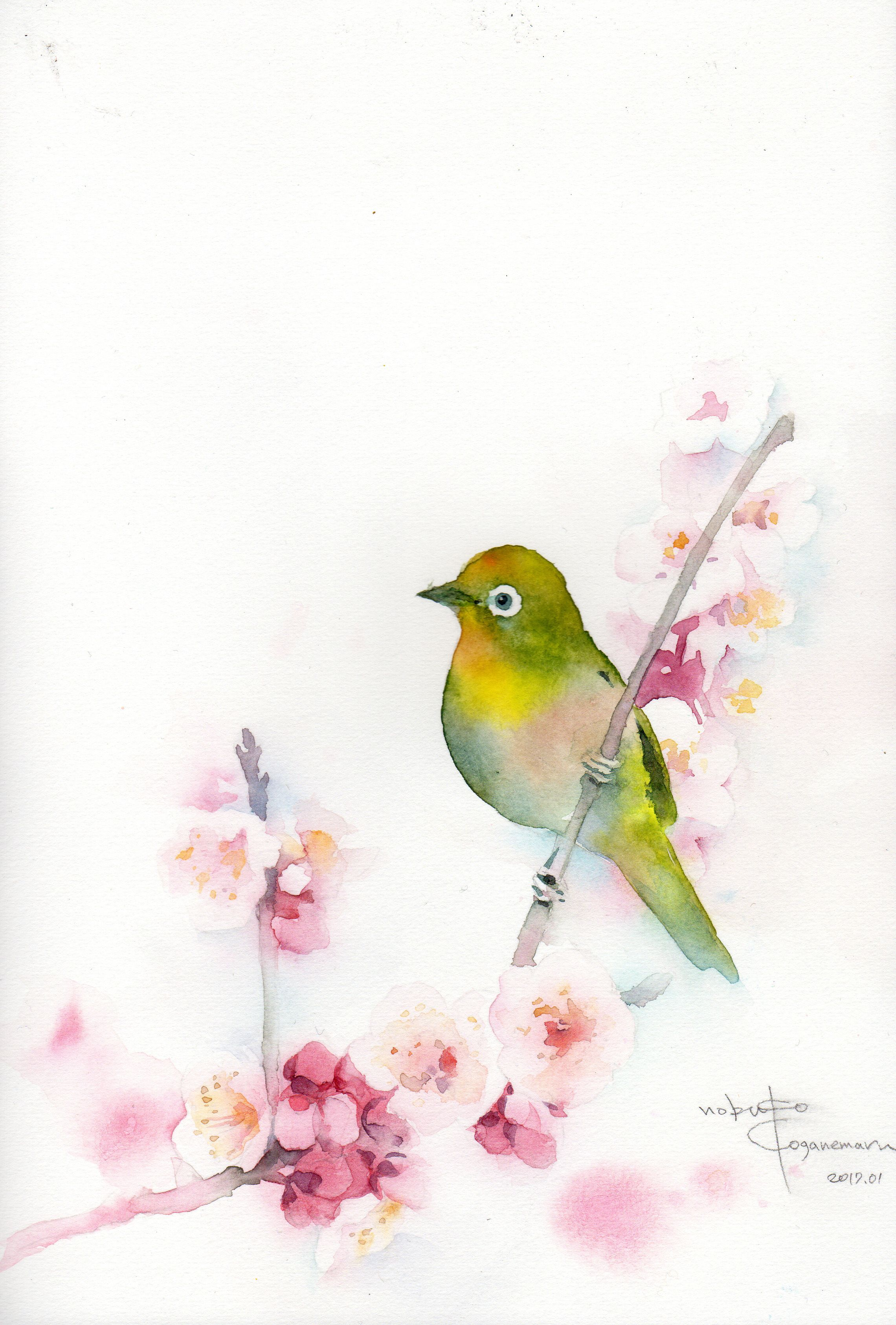 Plum blossom and mejiro