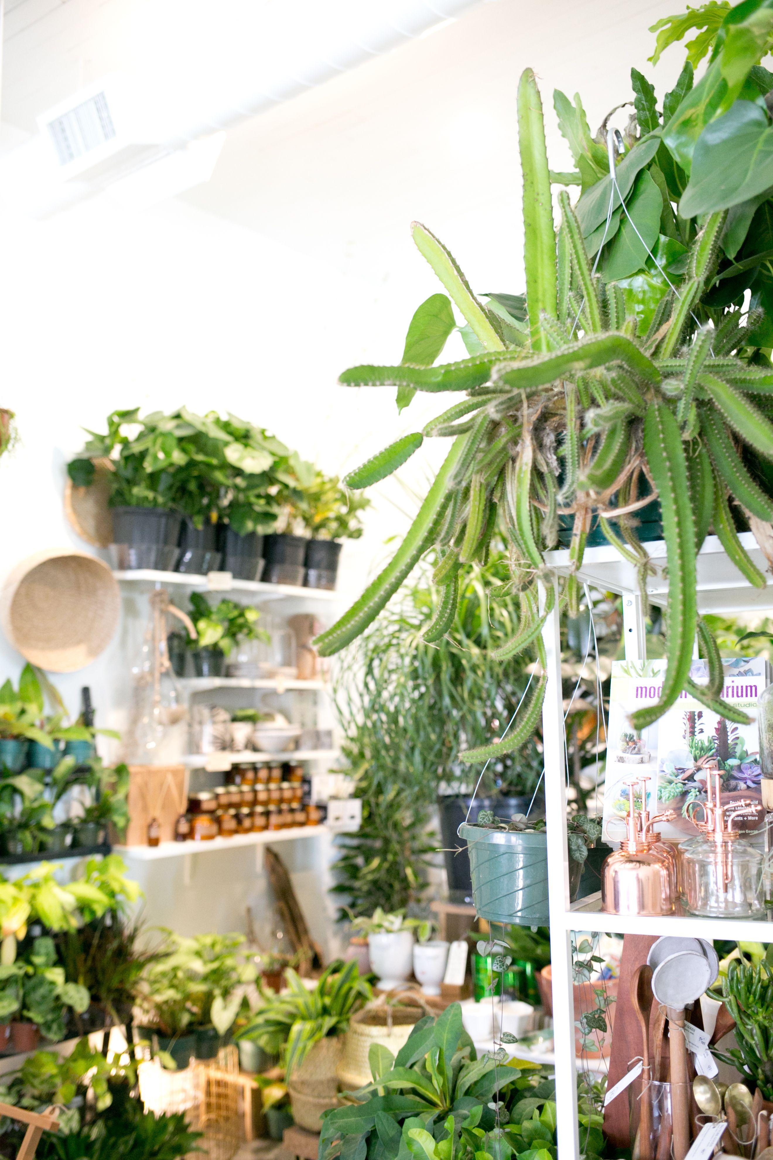 The Zen Succulent Plant Shop Corner Plants Planting