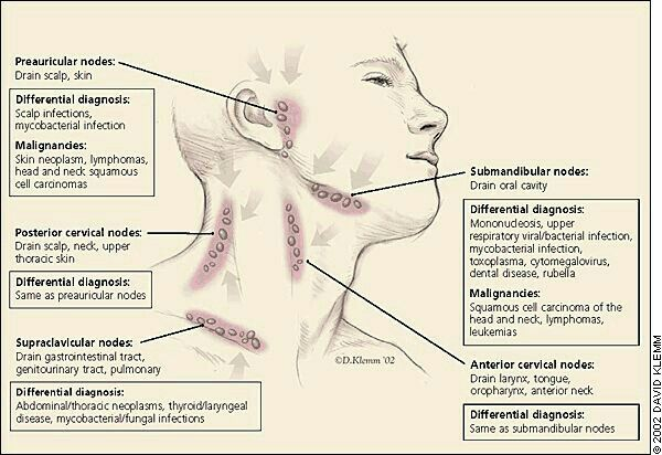 File Diagram Showing The Lymph Nodes In The Head And Neck Manual Guide