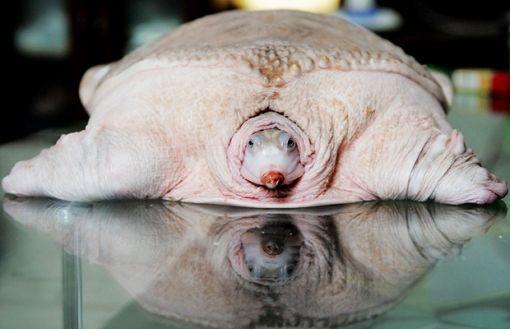 tortuga blanca!!