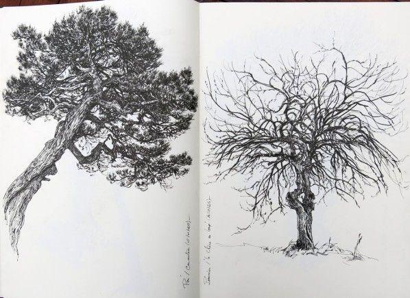 Carnet d 39 arbres etc en 2019 journal dibujos de - Croquis arbre ...