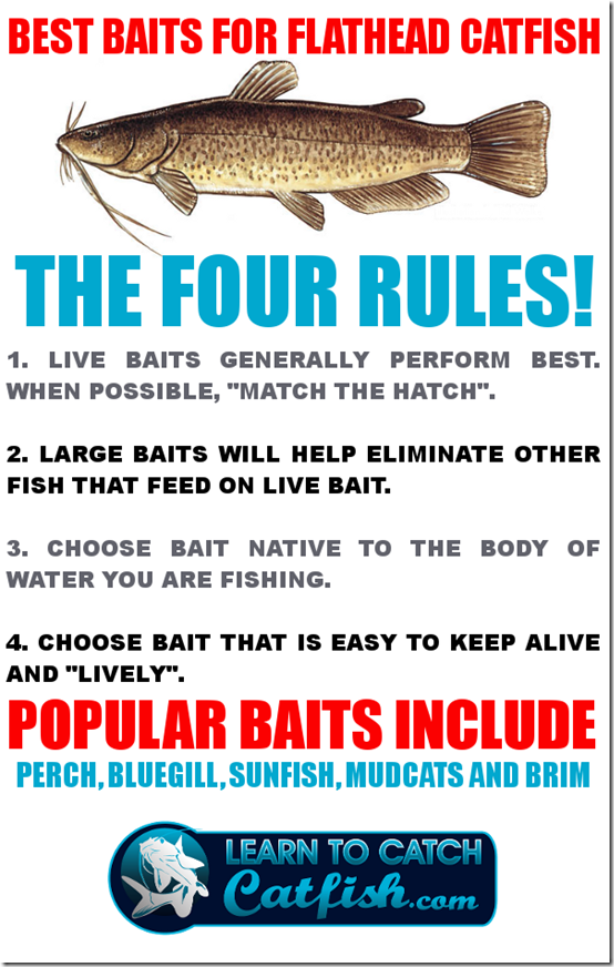 Best bait for catfish on flathead catfish here at for Best bait to catch fish