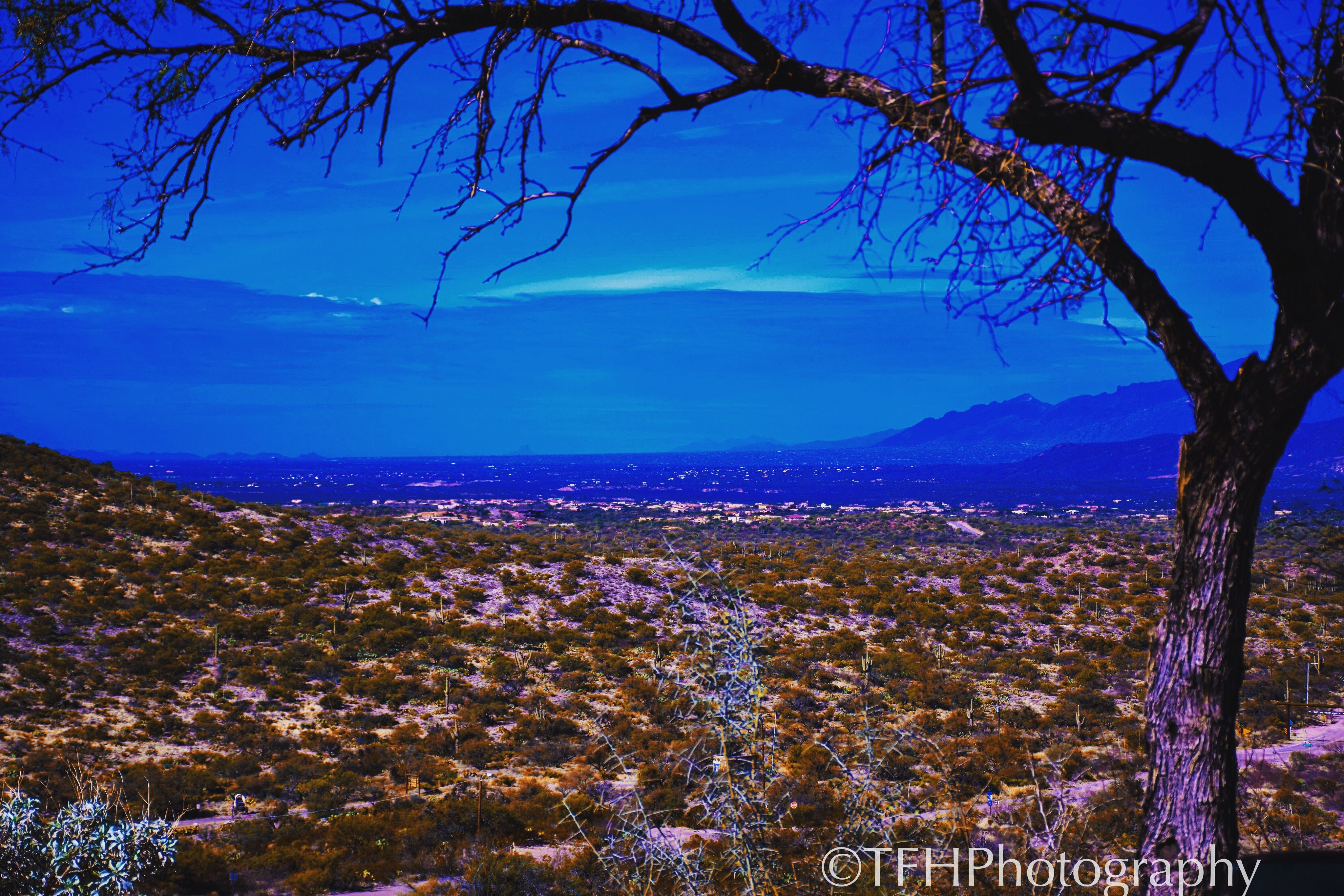 Surreal Tucson Landscape Scene