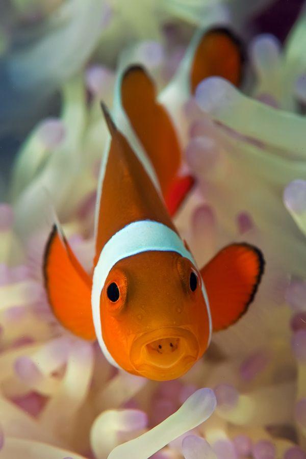 *Nemo - by Jonathan Lin