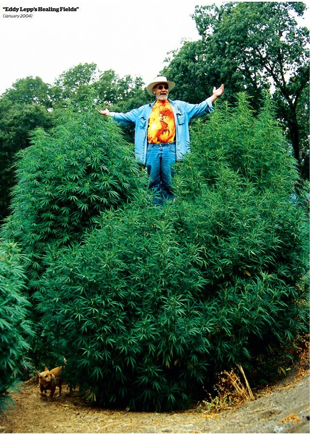 The Greatest Marijuana Gardens of All Time High Times Cannabis