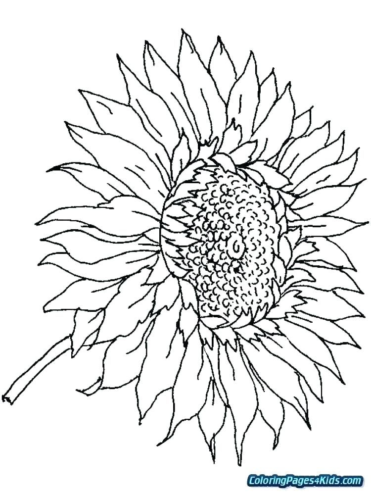 22+ Printable coloring pages for adults sunflower information
