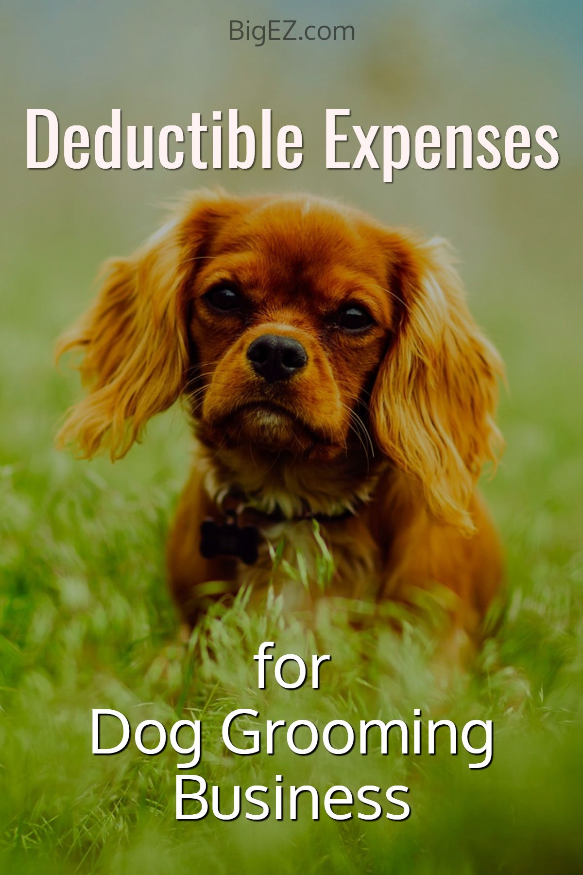 How To Start A Dog Grooming Business Dog Grooming Accounting Tips