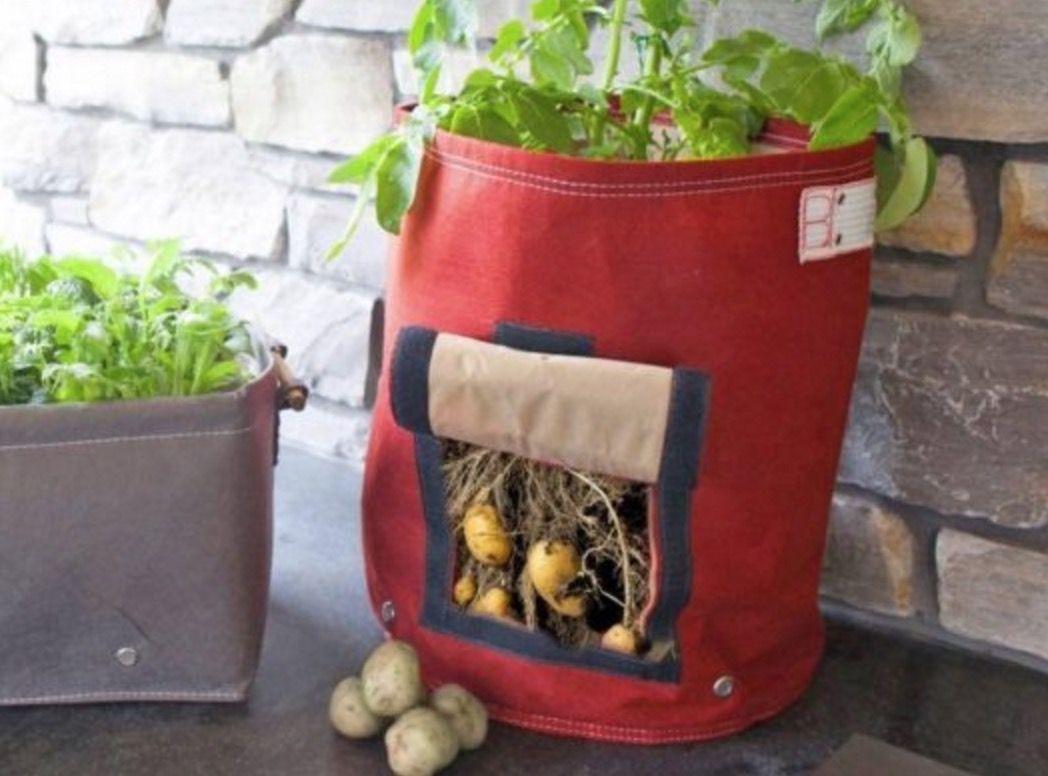 How to grow potatoes fast