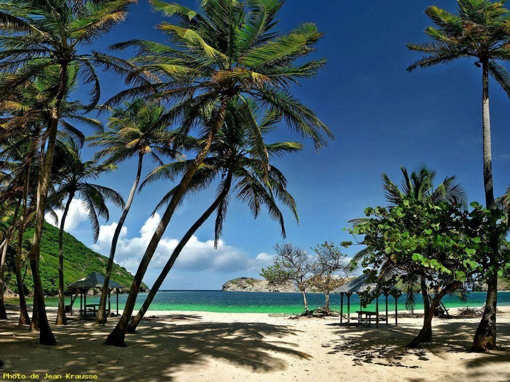 Isle Des Saintes Coconut Grove Beach