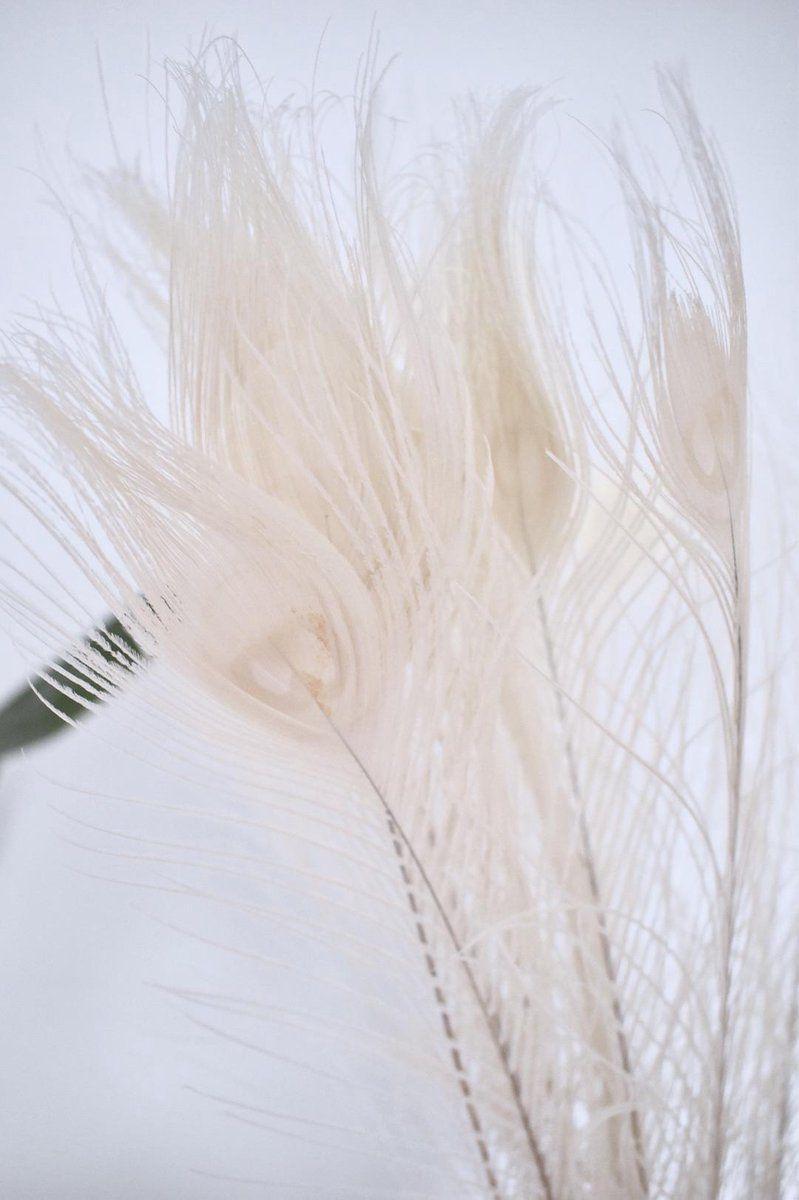 Pauwenveren Wit 10 Stuks 90 100 Cm Decoratie Pauwenveren In 2021 Witte Veren Pauwenveer Decoratie