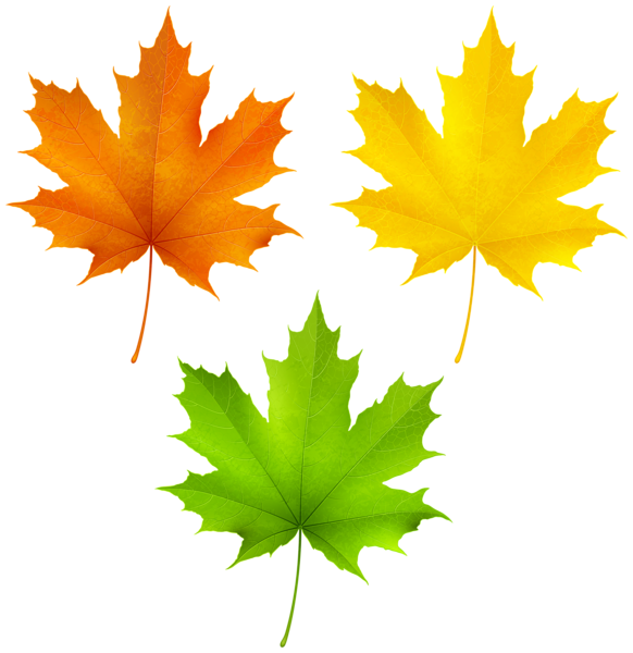 12+ Maple leaf clipart green ideas in 2021