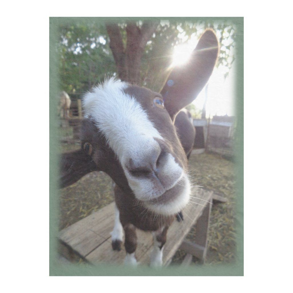 Goat Barnyard Farm Animal Fleece Blanket