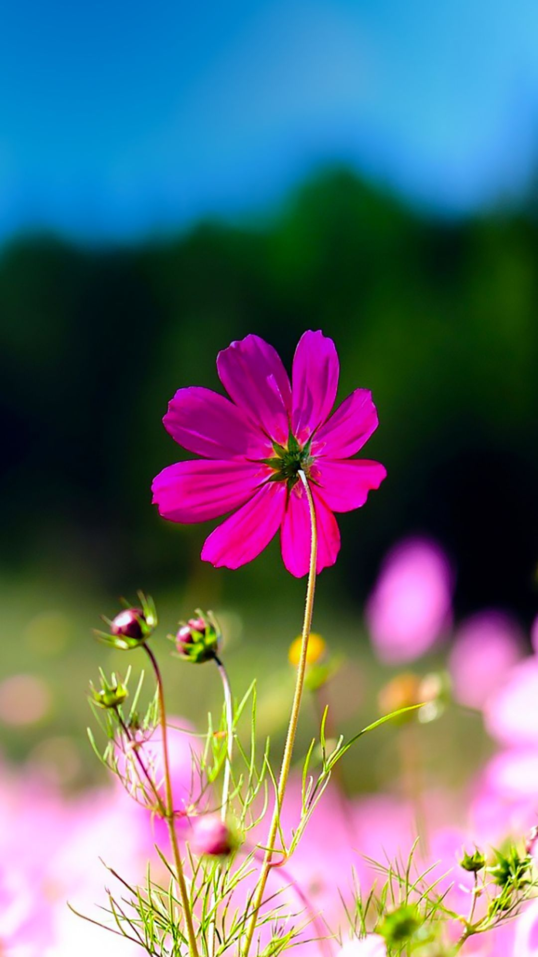↑↑TAP AND GET THE FREE APP! Art Creative Flower Nature Macro ... for Green And Pink Flower Wallpaper  21ane