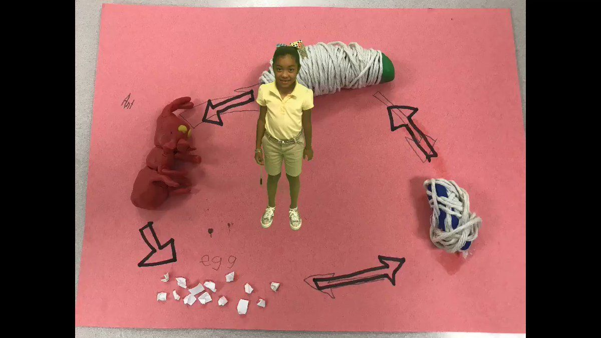Excellent Life Cycle project from Dianida Gonzales student