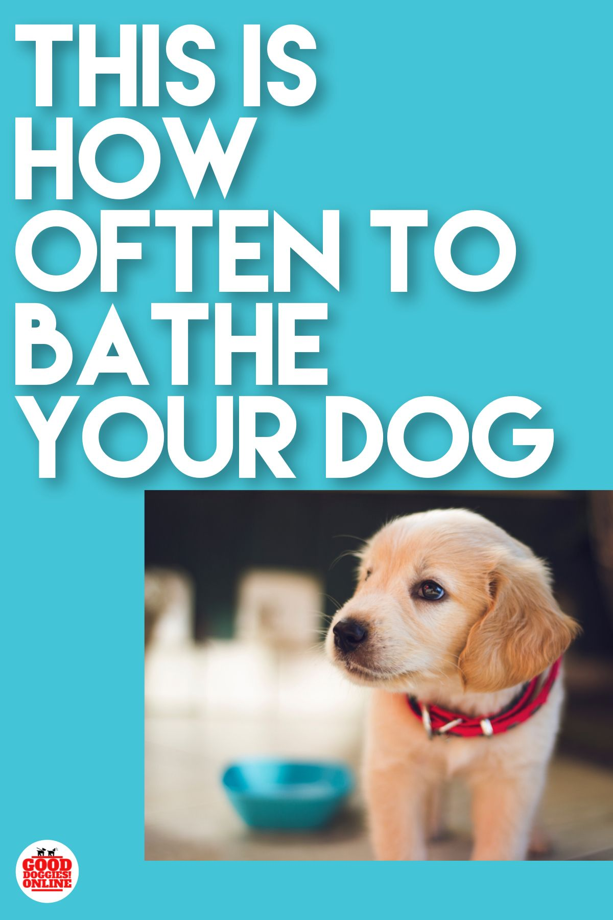 How Often To Bathe A Dog Bathing A Puppy Dog Care Dogs