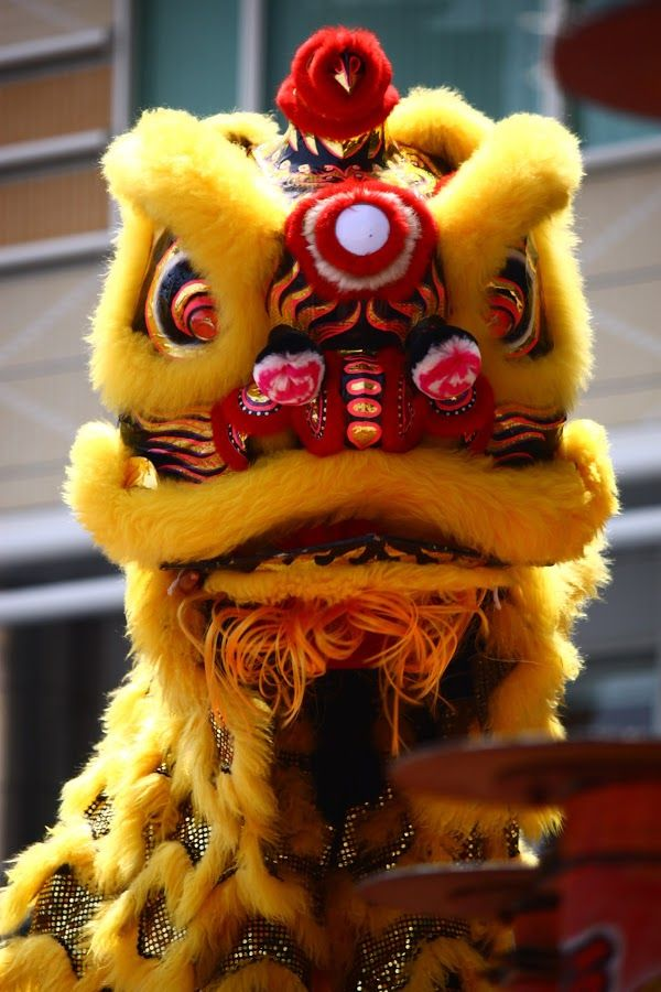 Chinese New Year Lion Dance. It was a must item in our ...