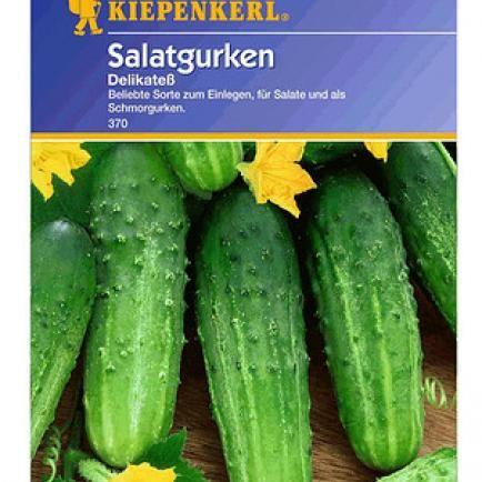 Einlegegurke Delikatess 1 Portion Gurke Salatgurke Mini Garten