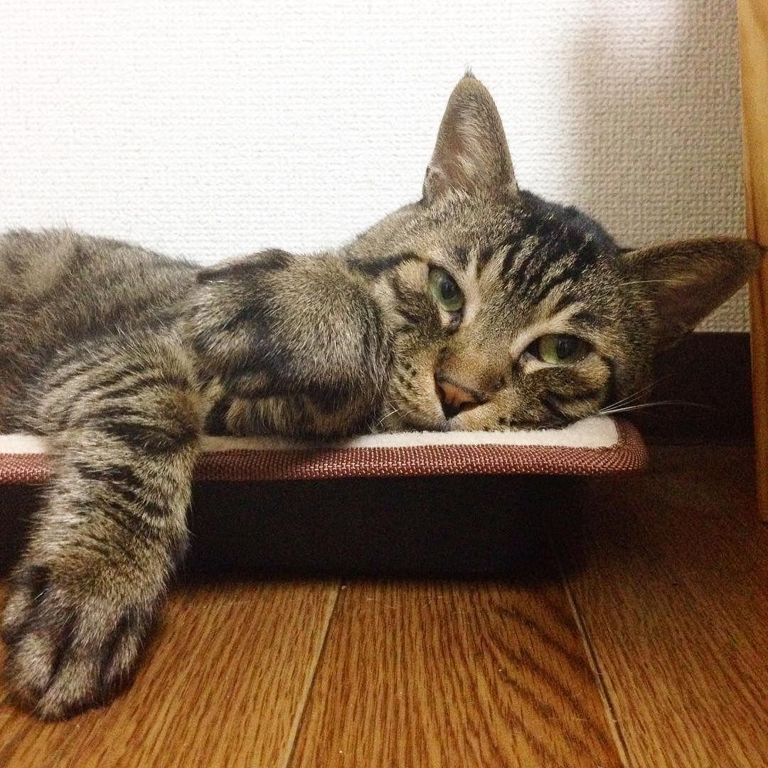 夜ムサシ部屋の隅からおやすみなさいGood night #musashi #mck #cat #キジトラ #ムサシさん by _daisy