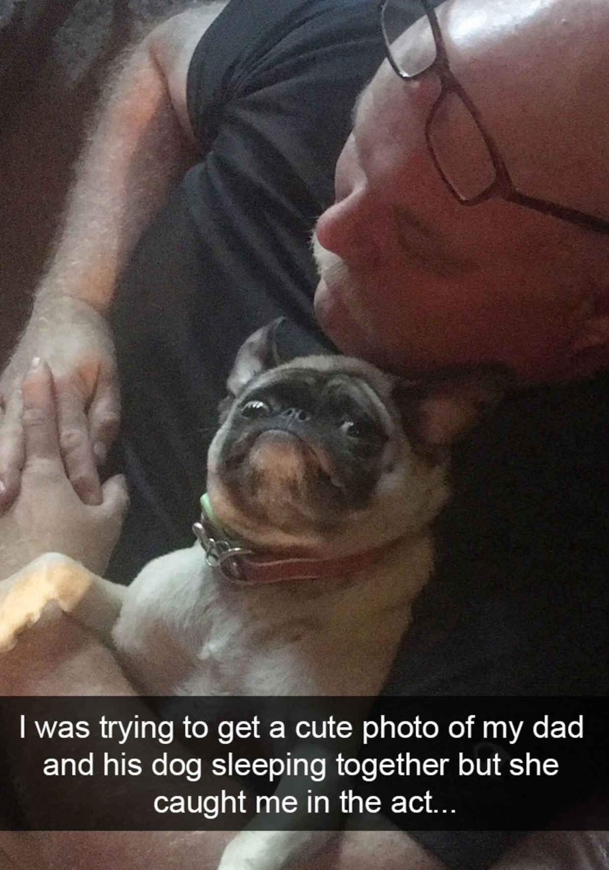 The Funniest Dog Snapchats Of All Time Dog Funny Animal And - The 29 funniest dog snapchats of all time