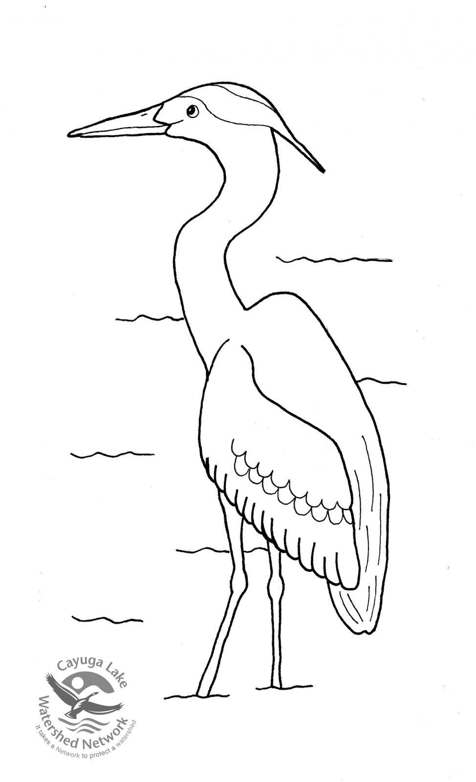 Heron Coloring Pages For Kids Heron Coloring Pages Printable Coloring Pages For Kids Blue Heron Heron