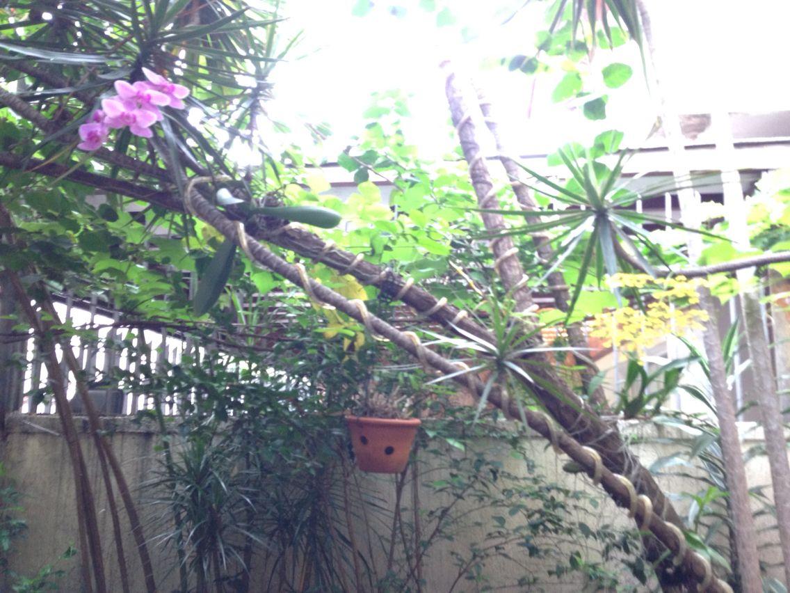 Duas orquídeas lindas, uma de cada lado!