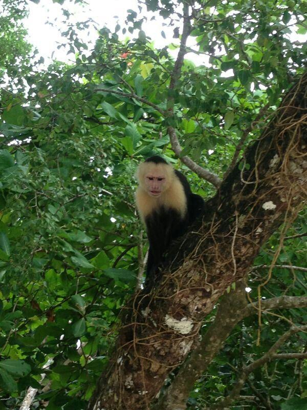 Parque Nacional Manuel Antonio. Monkey !!