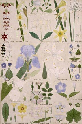 Christopher Dresser - Botanical Illustrations