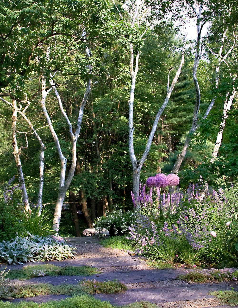 Belmont Hill Matthew Cunningham Landscape Design Llc Landscape Design Shade Garden Landscape