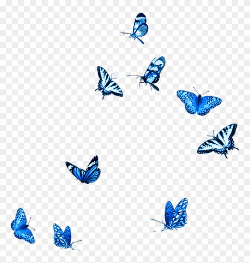 Find Hd Blue Butterfly Fly Animals Stickers Babochki Png Hd Png Download Is Free Png Image Download And Us Butterfly Background Blue Butterfly Neon Png