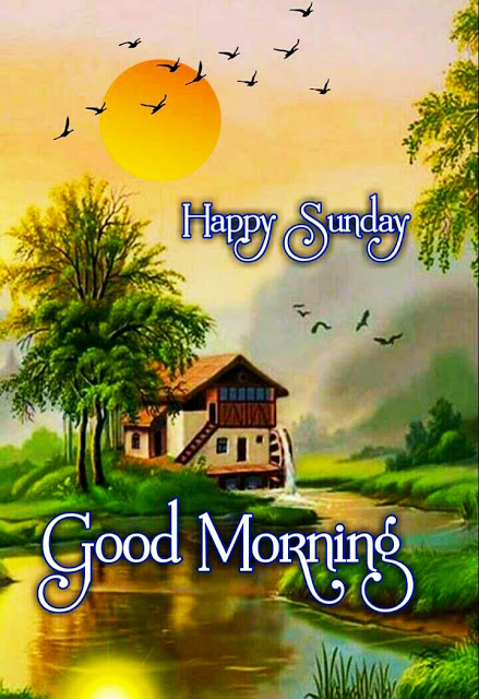 Good Morning Images For Whatsapp Free Download Hd Wallpaper Pictures Photos Of Good Morning In 2020 Good Morning Happy Sunday Good Morning Images Morning Images