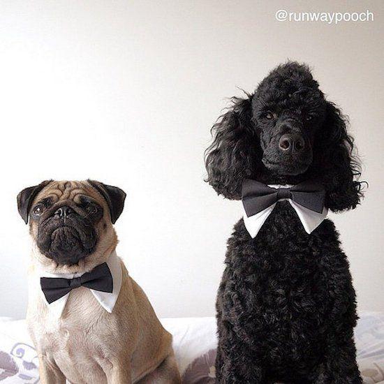 Beautiful Dog Collar Bow Adorable Dog - a47404ba0d14c9b9038f3126c825d85b  Gallery_100128  .jpg